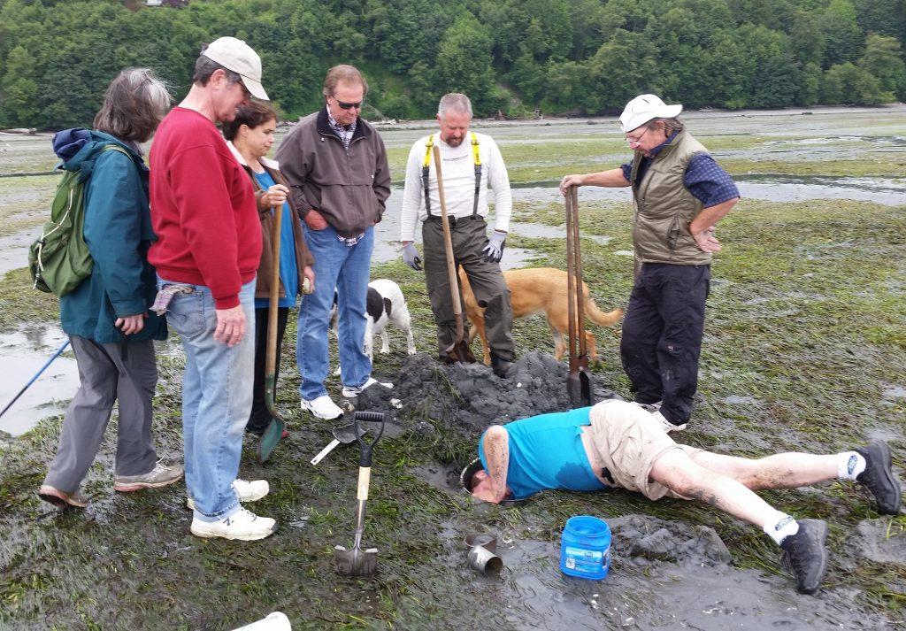 Digging for geoduck clams on Bainbridge Island, WA
