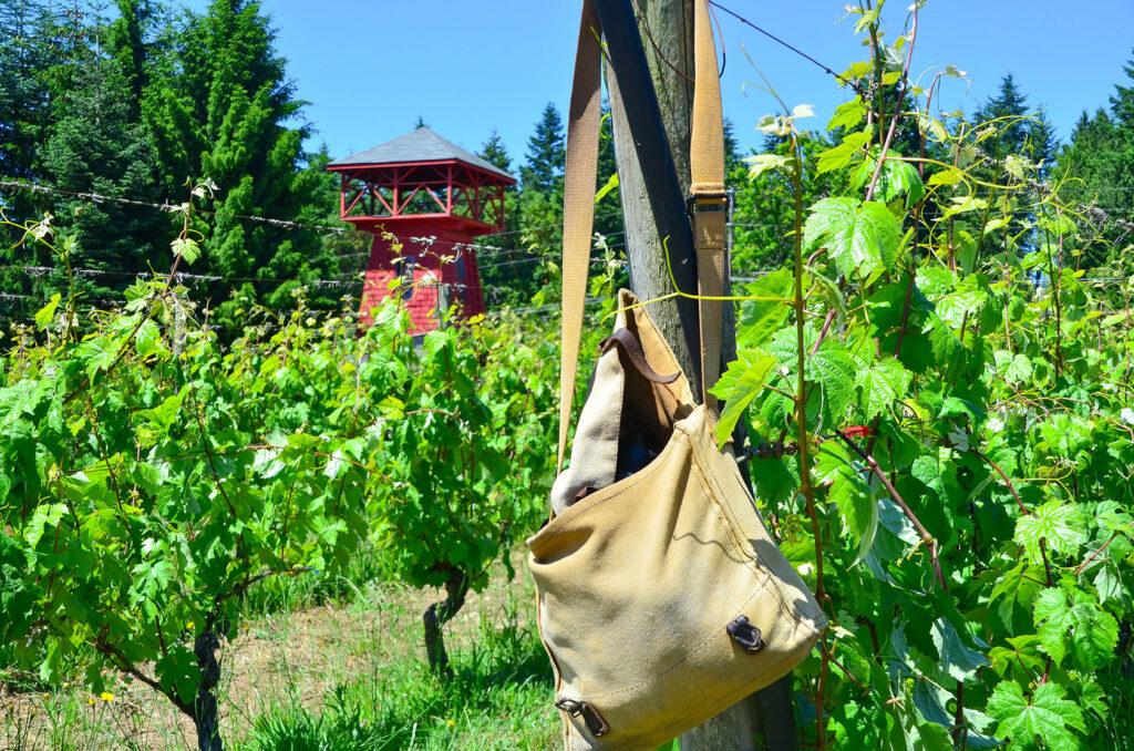 Bainbridge Vineyards - Agriculture and Agritourism
